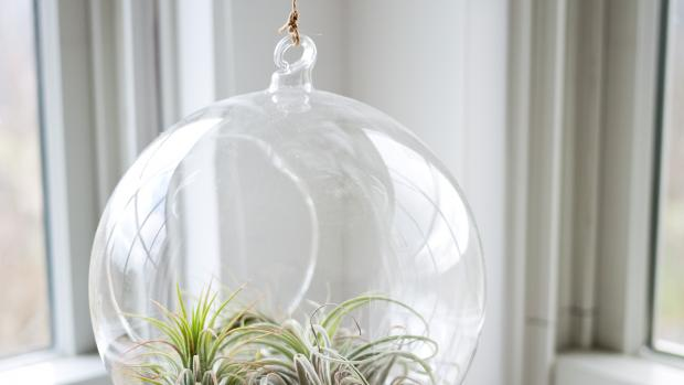 plant in a glass bulb