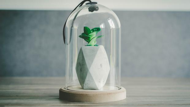 plant in a glass jar