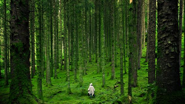 man in green forest