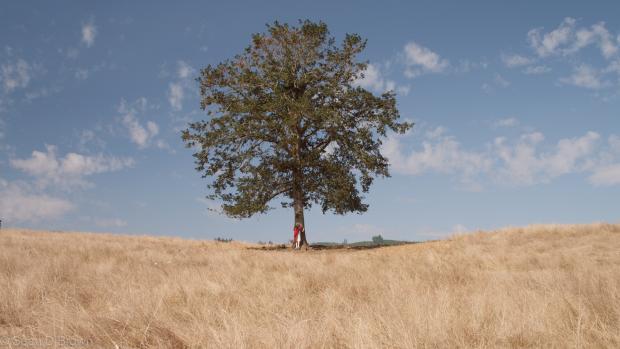 a little boy hugging a tree